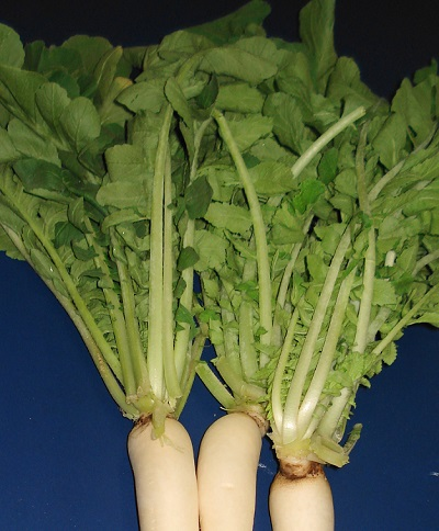 Mooli Ke Patte Khane Ke Fayde, Benefits of Eating Radish Leaves in Hindi